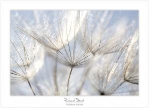 Macro-flore #001_Fraicheur estivale