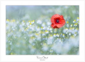 Macro-flore #003_Rebellion