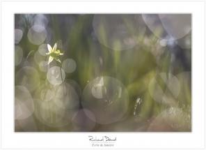Macro-flore #004_Ecrin de lumière