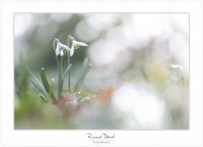 Macro-flore #005_Twin flowers