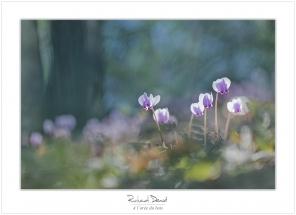 Macro-flore #008_A l'orée du bois