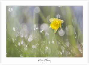 Macro-flore #009_L'espoir