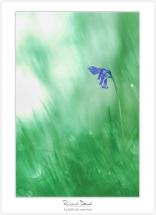 Macro-flore #011_La belle des sous-bois