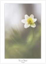 Macro-flore #013_Volupté