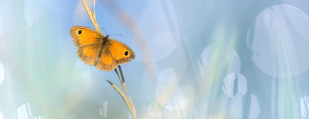 11_Papillons (4)