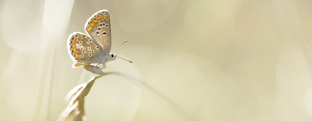 11_Papillons (5)